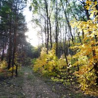 осень :: Дмитрий .