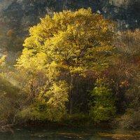золотое дерево :: Наталья Zima