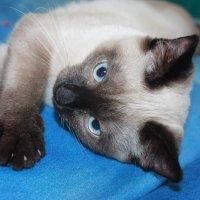 Кот по имени Гав :: NюRа;-) Ковылина