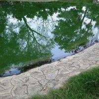 Зеленое отражение :: Оксана Шрикантх