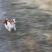 Друг собаки - это звучит гордо! :: Юрий Гайворонский