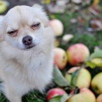 Устал от яблок :: Нина Алексеева
