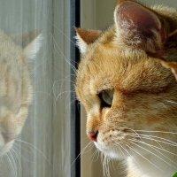 Мир кошки. :: Юрий Журавлев