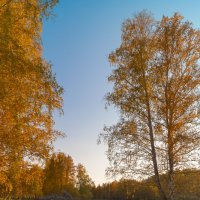 Золотая осень :: Леонид Санников