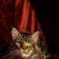 Шерлок кот :: Катерина Терновая