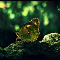 Бабочка :: Ридван Сардаров