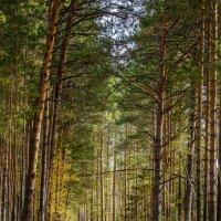 В лесу :: Аркадий Медников