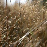 Травы...  травы... 2 :: Валерия  Полещикова