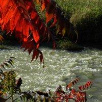 Осень листья поджигает... :: Юрий Поляков