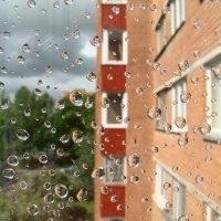 после дождя :: linnud