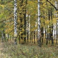 Золотая осень :: Андрей Чиченин