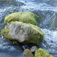 Морские камни :: Татьяна Лобанова