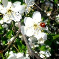 весна :: Ольга Воронина