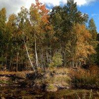 Осенний лес. :: Hаталья Беклова