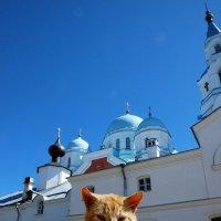 Коты...монастыря :: tipchik