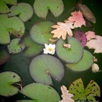 жизнь - это куча мелочей...неважных и случайных. :: Ирина Сивовол