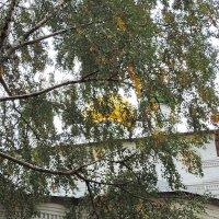 Благолепие Сретенского монастыря. Осень. :: Геннадий Александрович