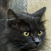 """Жил да был чёрный кот..."" :: Валентина *"