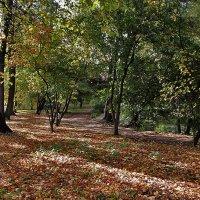 Солнечная осень :: Nikolay Monahov