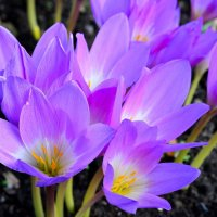 Осенние цветы... #2 :: Андрей Вестмит