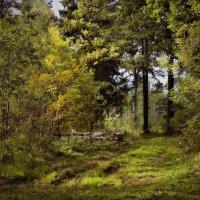 Лес в сентябре. :: Елена Kазак