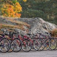 Осенний марафон... ) :: Bosanat