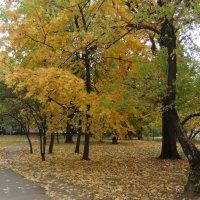 Осень в городе :: Наталья Александрова