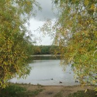 Терлецкий пруд :: Наталья Александрова
