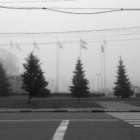 Легкий утренний туман. :: Кристина Кеннетт