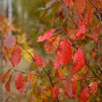Осень :: Константин Смирнов