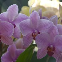 Орхидеи в Аптекарском огороде :: marmorozov Морозова