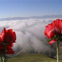 гора Палач :: Roman Габдульбаров