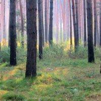 Утро в лесу . :: Мила Бовкун