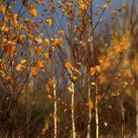 И  осень...осень... :: Валерия  Полещикова