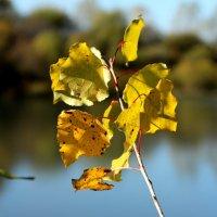Золотая осень :: Дмитрий Арсеньев
