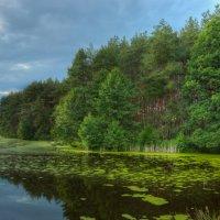 Живописное болото :: Кирилл Малов