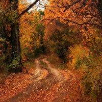 Куда уходит осень........ :: Olenka