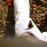 Осень....последние летние бабочки....... :: Ирина Малинина