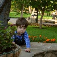 В парке осенью :: Marina Timoveewa