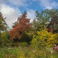 Осенний сад, люблю твое молчание... :: Надежда