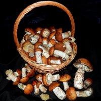 Ну что за осень без грибов ? :: Hаталья Беклова
