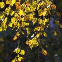 Осенние этюды 2 :: Igor Zau