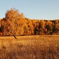 Осень :: Вера Саитхужина
