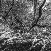 В лесу :: Yuliya Kalinovskaya