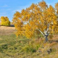 во поле берёзка стояла... :: Maxxx©
