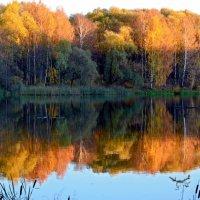 Осень в лучах закатного солнца... :: Ольга Русанова (olg-rusanowa2010)