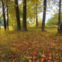 Осенний вальс :: Павлова Татьяна Павлова