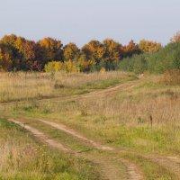 золотая осень :: Наталья Петрова