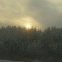 зимний лес :: Катерина Шильнова