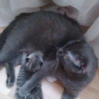 мать и дитя :: Катерина Шильнова